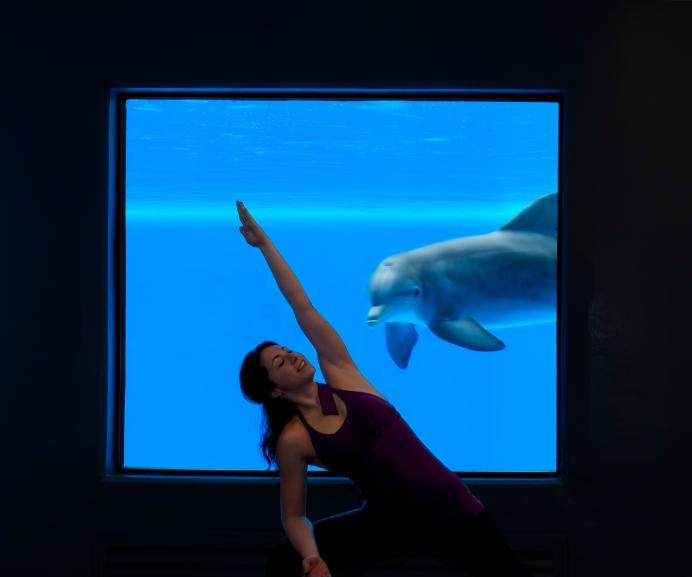 YogaDolphinsHighRes2